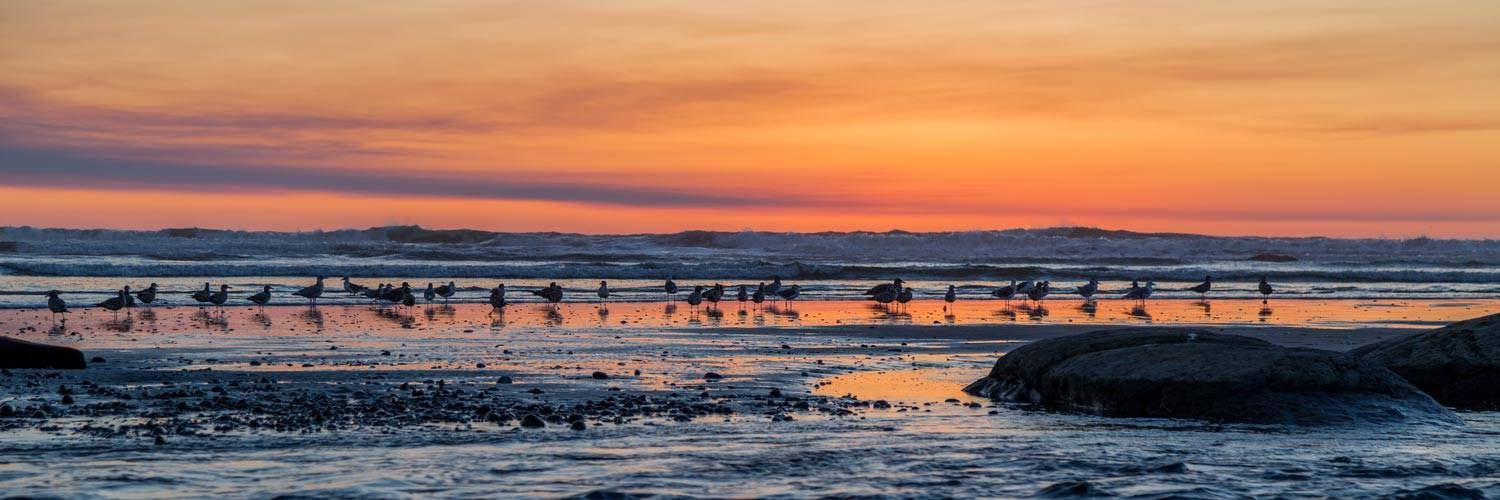 Birds line up to enjoy a classic coastal sunset near Kalaloch Lodge.