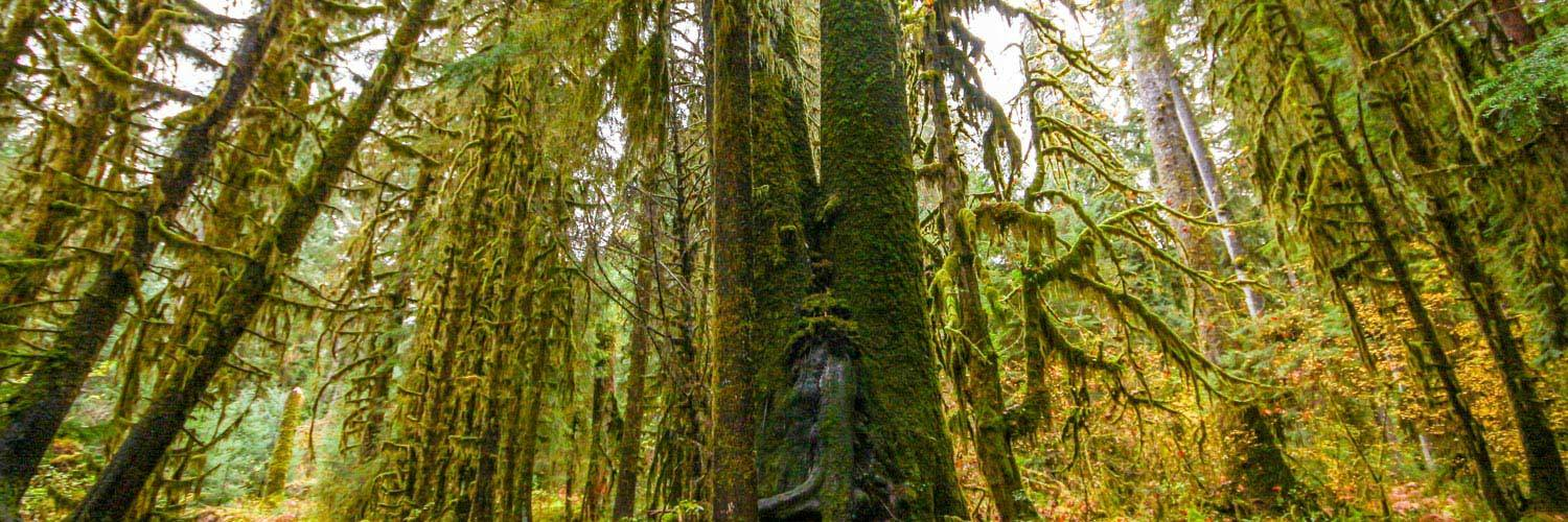 With the Hoh Rainforest at our back door, we take our commitment to the environment seriously at Kalaloch Lodge.