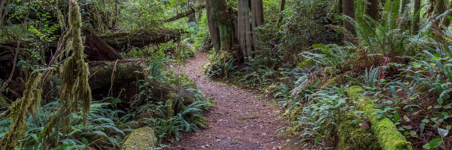 Enjoy an Olympic National Park audio tour on your mobile phone for a guide to Olympic