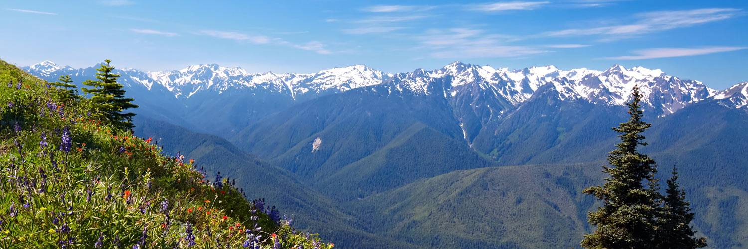 From mountain wildflowers to snow-capped mountains, Hurricane Ridge is one of Olympic National Park