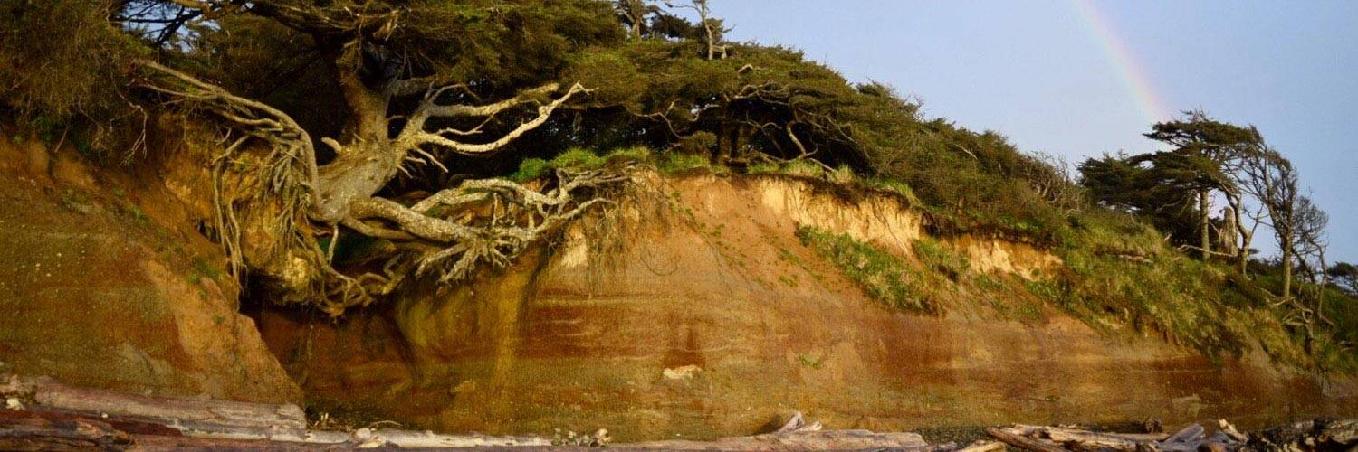 "Visit the infamous ""Tree of Life"" (aka Tree Root Cave) when you explore Kalaloch!"