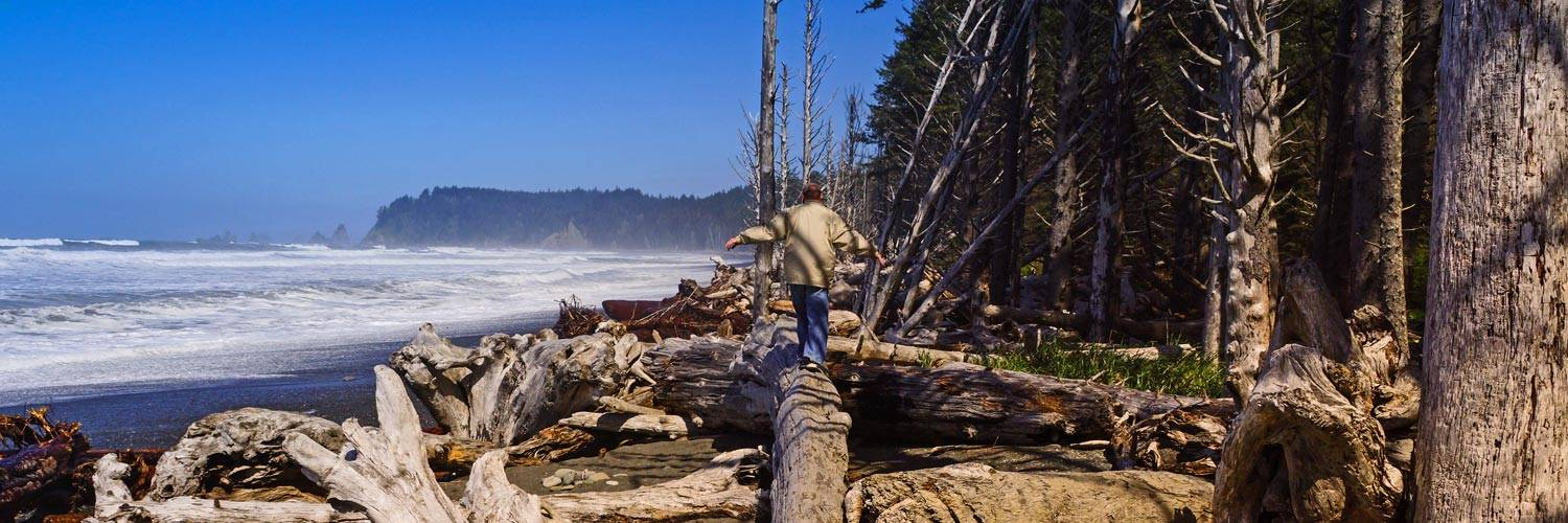 Top 5 All-Season Activities at Kalaloch Lodge