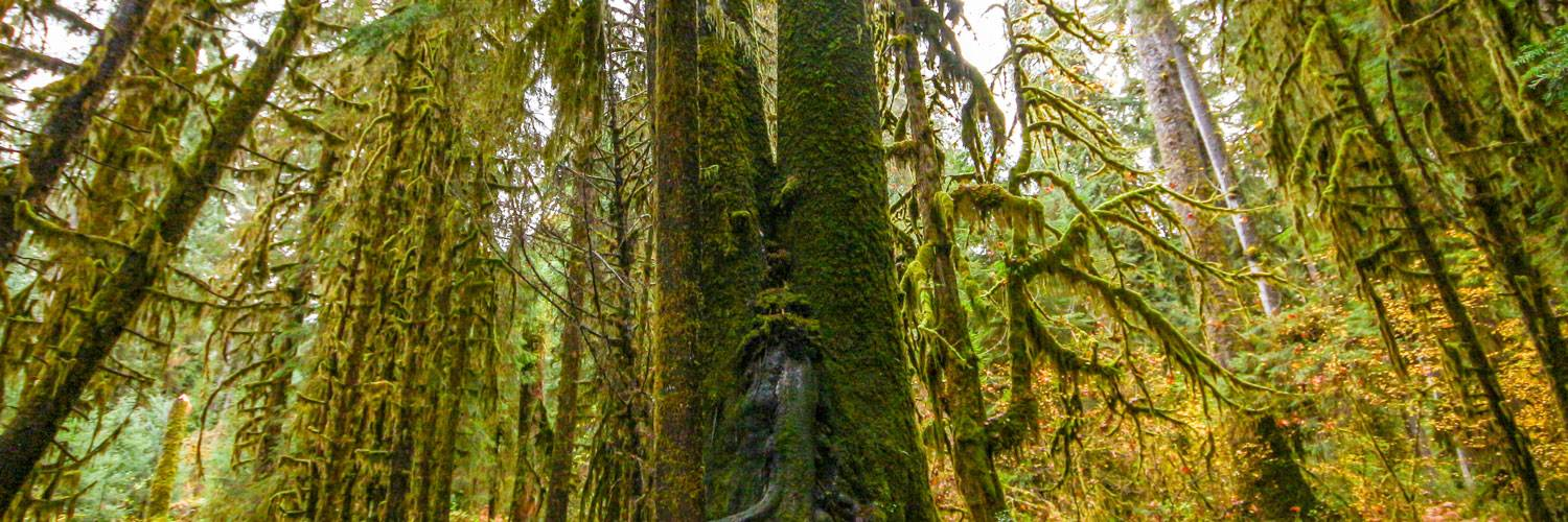 Explore exciting activities from Kalaloch Lodge, including the Hoh Rainforest in Olympic National Park.