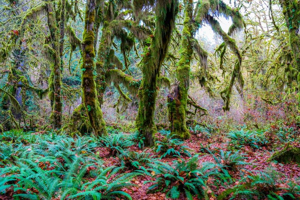 Hoh Rainforest mosses near Kalaloch Lodge.