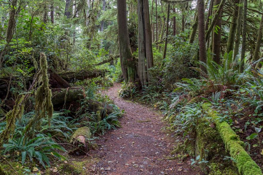 Get an Olympic National Park audio tour to guide you down paths like these in the Hoh Rainforest.