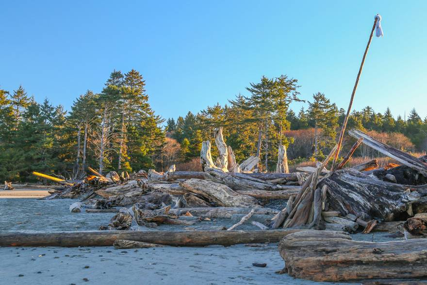 Giant driftwood logs near Kalaloch Lodge form sculptures in the golden light of sunrise.