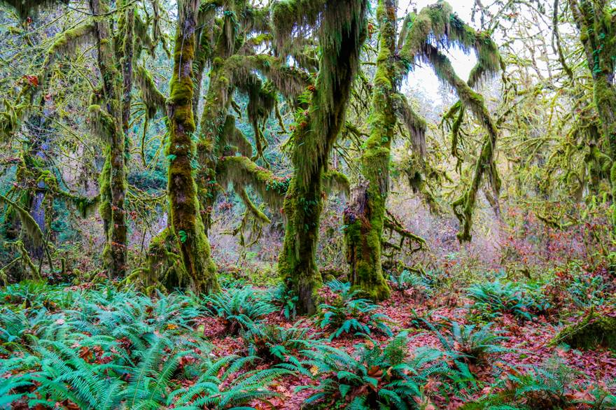 The Hoh Rainforest in Olympic National Park is close to Kalaloch Lodge.