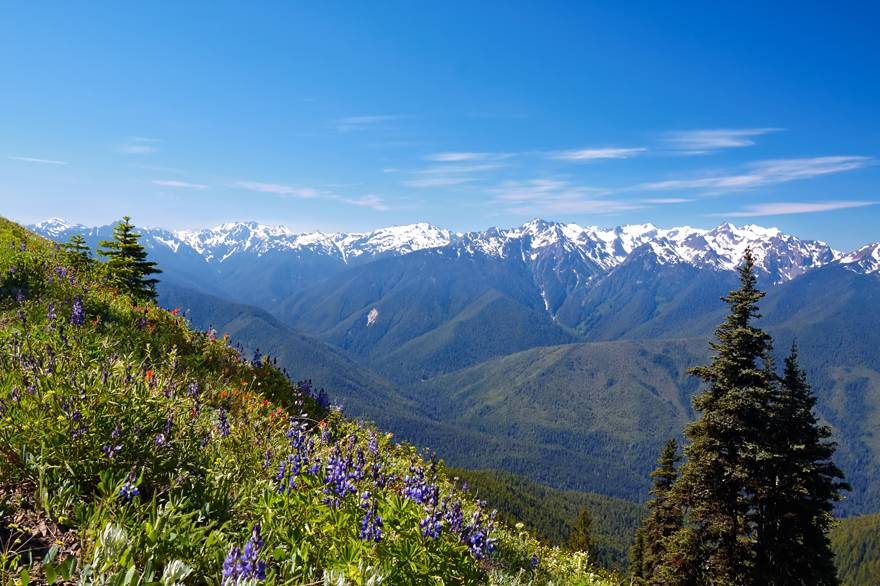 Hurricane Ridge provides magnificent views of the mountains on the way to Kalaloch Lodge.