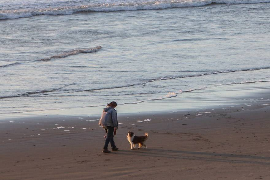 Treat your pet to some beach time on Kalaloch Beach, and the Pampered Pooch Package at Kalaloch Lodge.