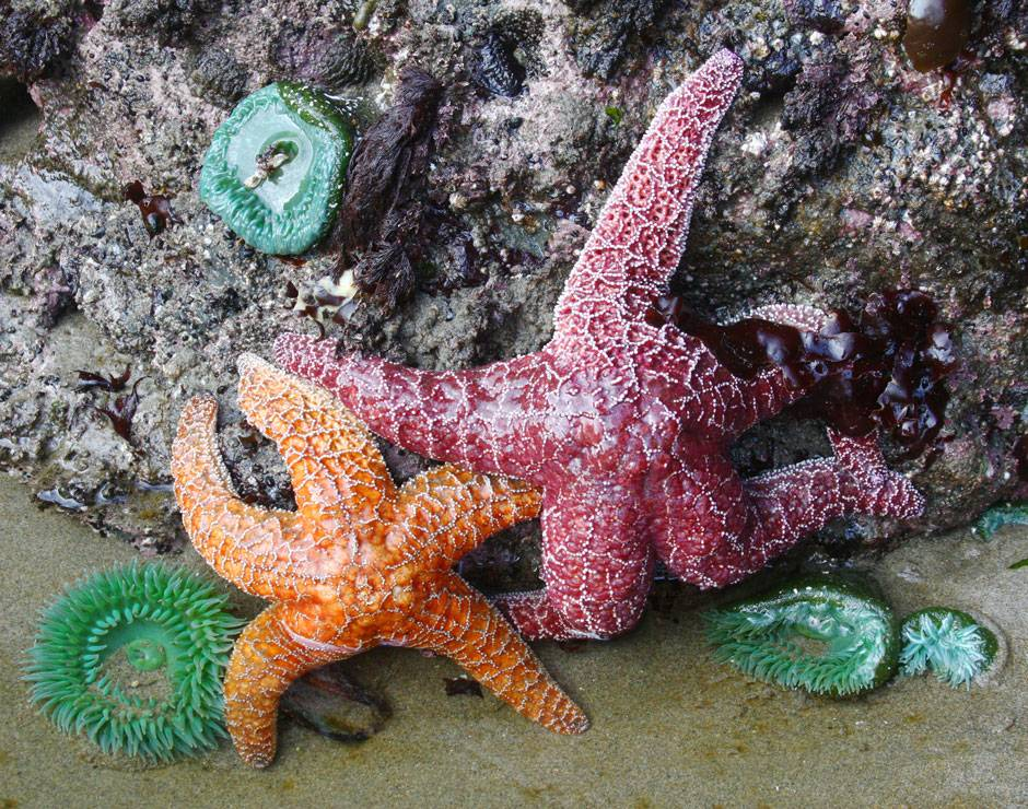 Explore all the things to do at Kalaloch, including tide pooling to see beautiful starfish, anemones & more.