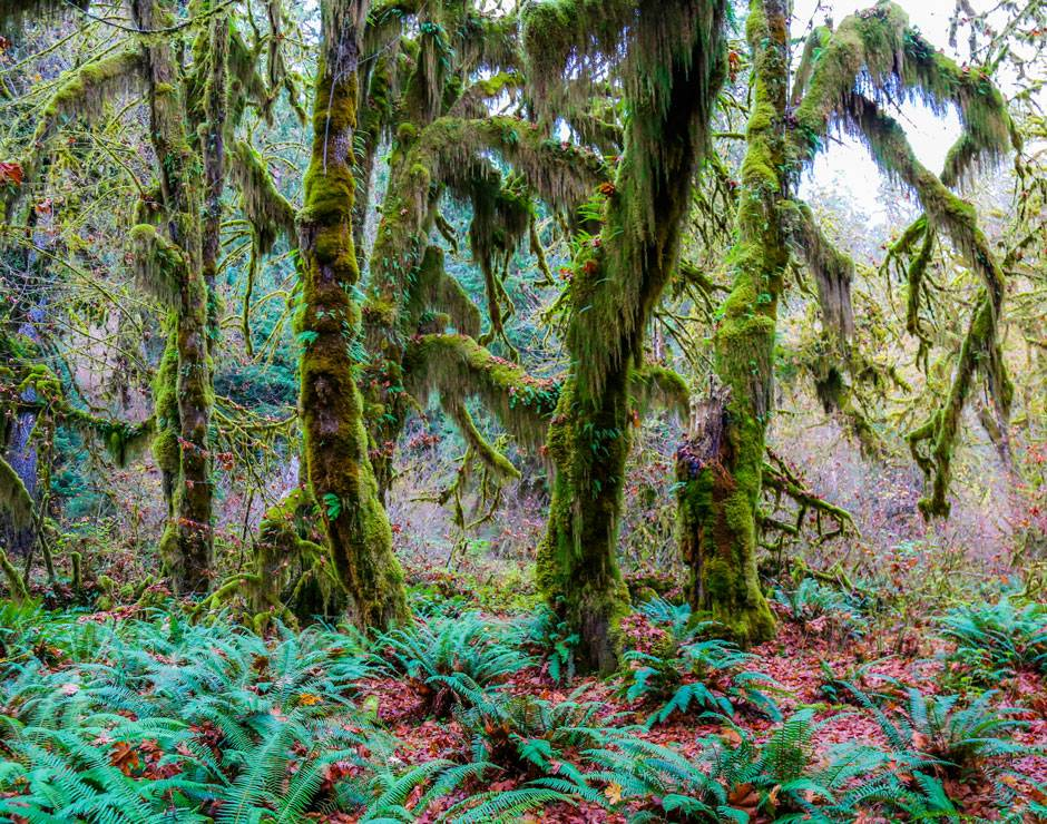 Explore the many things to do in Olympic National Park from Kalaloch Lodge, including the enchanting Hoh Rainforest.